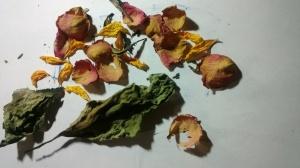 fiori e foglie secche