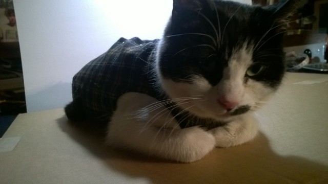abito-quadro-gatto-1