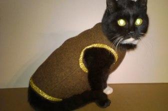 Abito in pura lana per gatti con profili dorati